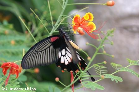 Rare Species Of Birds Hidden China GmbH - Fa...