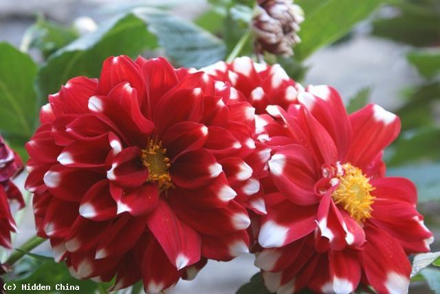 hidden china gmbh flora in china